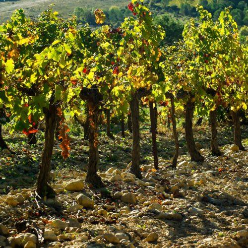 vineyard-1002841